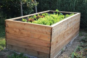 Hochbeet aus Holz mit Hochbeeterde und Salatpflanzen